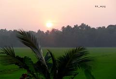 INDIAN SUNSET, Alleppey, Kerala, India (kk_wpg) Tags: kerala backwaters travel 2012 asia india kkwpg travelpictures travelphotos alleppey sunset palm palmtrees
