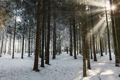 A winter moment (desomnis) Tags: winter snow trees frost frosty light flare lightflare canon6d tamron2470 desomnis 6d canon mühlviertel austria österreich upperaustria oberösterreich forest woods wood nature whitefrost