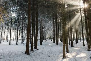 A winter moment