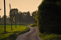 A lifelong road (Marco MCMLXXVI) Tags: varese italy landscape countryside outdoor sunset tramonto campagna luce light lightandshadow colors road backroad pentax kx tele trees contrast lines strada saronno