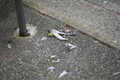 Vancouver - XVII (• CHRISTIAN •) Tags: vancouver bc britishcolumbia colombiebritannique canada rue street trottoir sidewalk oiseau bird mort death plumes feathers urbain urban 50mm f14