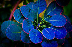 Midnight Blue. (Omygodtom) Tags: blue abstract detail macro art texture nature dark yahoo google nikon flickr cloudy bokeh explorer odd existinglight simple tamron facebook tamron90mm d7000