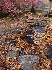 Feuilles mortes - Fallen leaves (Jacques Trempe 2,540K hits - Merci-Thanks) Tags: autumn color fall leave automne quebec morte fallen couleur feuille caprouge