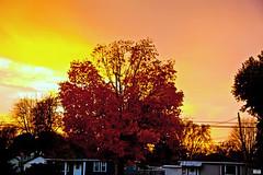 Autumn dusk (Tinpixels) Tags: dusk autumncolors fallfoliage clearingstorm ultimatephotos