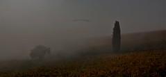 "vigneti toscani in autunno ("" paolo ammannati "") Tags: autumn tuscany toscana 1001nights autunno vigneti paoloammannati 1001nightsmagiccity"