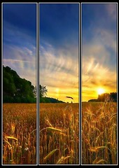 Wheatfield Sunset Triptych (Bob Smerecki) Tags: auto sunset mountains smart digital pencil photo artwork graphics triptych dynamic paintings picture bob illustrations drawings pastels painter hikers editor watercolors oils colorization v4 x64 sketchings panles smackman snapnpiks smerecki