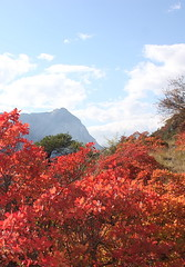 Turtmann ,valais 2014 (luka116) Tags: automne schweiz switzerland suisse swiss svizzera arbre wallis octobre valais talus 2014 cotinuscoggygria turtmann coteaux arbustre getwing