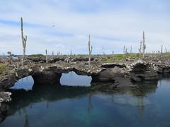 Galápagos - Isabela-157