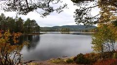 Autumn Lake 2 (bjorbrei) Tags: autumn trees lake water oslo norway forest branches skjersjøen