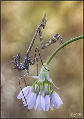 Una florecilla (- JAM -) Tags: jam juanadradas