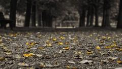[Explore #399] Autumn (Froschknig Photos) Tags: autumn color leaves yellow key herbst explore gelb m42 blatt bltter michau markranstdt helios442 froschknigphotos nex5r