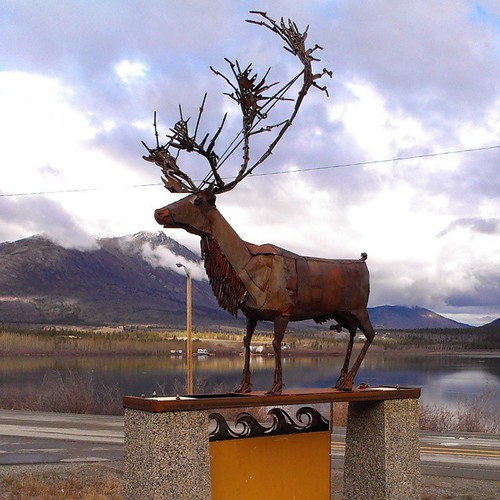 Carcross was once named Caribou Crossing because the Natasaheen River, between Bennett and Nares lakes, was a migration crossing point for Woodland Caribou. Carcross/Tagish First Nation, in cooperation with Yukon Government, have banned hunting caribou in