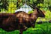 zoo. (angsthase.) Tags: green grass animal fence germany deutschland zoo pattern shadows nrw grün zaun schatten ruhrgebiet dortmund antilope 2014 ruhrpott mft micro43 epl5 olympuspenepl5
