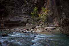 DSC_1204.jpg (Ron W. Craig) Tags: national zion zionnationalpark narrows thenarrows parkthe