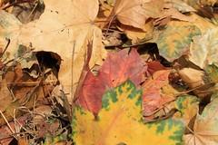 Autumn (Sandra Király Pictures) Tags: autumn fall poland krakow kraków