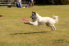 Happy Dog (☺♥ julev69 ♥☺ 1,925,000+ Views- THANK YOU!) Tags: pink blue trees sky dog lake reflection art dogs nature water yellow clouds digital landscape ir photography one photo jump pond flickr artist day julie photographer shot spectrum action unique fine creative sunny competition full kind photographs frisbee visual rare doggie everhart skyhoundz 500px viewbug skyhound jeverhart julev69