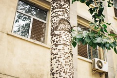 patterns on a tree (katy.wang) Tags: china building tree film me window nature leaves 35mm pattern pentax kodak super 200 trunk pentaxmesuper