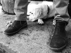 _a sus pies_ ([marta díez . fotografía]) Tags: dog blancoynegro canon perro labradorretriever raza labarador ixus55