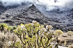Mountains (nora2810) Tags: cactus mountains island gran canary canaria