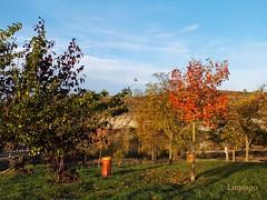 Colores de otoo (Lumiago) Tags: naturaleza rboles paisaje colores otoo