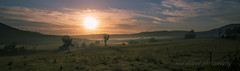 morning everyone (neil aldred) Tags: morning mist sunrise nsw fields lithgow