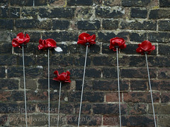 Blood Swept Lands and Seas of Red II (Phil Walker Photo) Tags: ocean city red sea building london tower art pool thames interesting blood memorial wwi wave prison event wash installation poppies destination ww1 es remembrance effect barracks fortress iconic toweroflondon goldenhour seeping commemorative armistice beefeaters yeomen