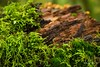 276 of 365 project: Moss and its neighbors