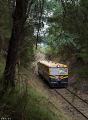 Yarra Valley (Dobpics O'Brien) Tags: yarra victorian victoria vr valley rail railway railways 22rm walker railcar diesel special tunnel healesville train