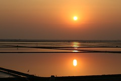the early bird (PawL23) Tags: petchaburi thailand sunrise sun saltfields lines silhouette goldenhour golden