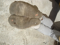 Dirty White Cotton Socks (SmellyFeetBoy) Tags: dirty dirtywhitesocks filthy smelly gross nasty muddy crusty holey holes stinky tiny socks feet foot fetish footwear raunch boy twink skinny small cotton toes soles hindpaws male man guy solo trashed stink stench used worn torn young