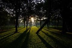 Luz, líneas y sombras... (Jhaví) Tags: bangkok lumpinipark thailand asia southestasia sombras líneas shadow parque luz light sunrise city park