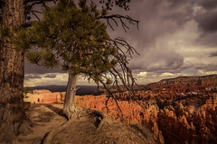 Scenic view (Juan Pablo J.) Tags: nature naturephotography naturaleza naturepics brycecanyonnationalpark brycecanyonutah bryce landscapes outdoors clouds utah sonya68 tonikasd1116f28dx tree