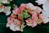DSC02943 (Michael Rasmussen) Tags: flower flowers amount minolta minoltaamount sony sonya99 sonyalpha berlin gartenderwelt