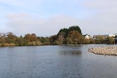 204 (AO'Brien) Tags: arklow autumn wicklow