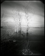 Kelley Point 170302 (jimhairphoto) Tags: kelleypoint willametteriver columbiariver confluence america nw northwest leftcoast oregon remainsoftheday naturalworld 4x5project crown graphic homemade wideangle fixedfocus camera 4x5 film rollei ir infrared blackandwhite blancetnoir schwarzeaufweis blancoynegro blancinegre siyahrebeyaz jimhairphoto