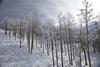 2017-00393 (kjhbirdman) Tags: activities colorado places snowskiing steamboatsprings unitedstates