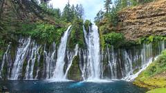 Burney Falls - Falls Loop Trail (adzamba) Tags: 2016 burney california unitedstates usa burneyfalls acqua cascate creek falls fallslooptrail fiume river
