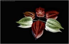 little-lampions (verenaredfoxgredler) Tags: verena gredler redfox redfoxdreamartphotography innsbruck tirol austria österreich photographer model modell photomodel fotomodel abstract abstrakt art kunst light licht lampion color farbe macro makro