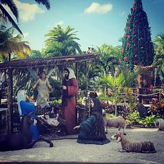 La Navidad en Cozumel (antoniosanchezserrano) Tags: instagramapp square squareformat iphoneography uploaded:by=instagram xproii navidad christmas mexico mejico cozumel caribe belen