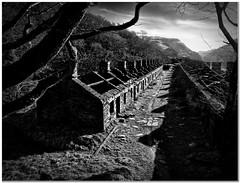 Anglesea barracks (Hugh Stanton) Tags: vines slate building barracks appicoftheweek