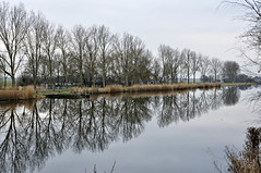 The Delft and Veenpolderdijk (jan_vrouwe) Tags: delft dijk dike assendelft zaanstad winter farm tree trees sky shore bollard horizon reed