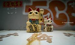 Maneki-Neko in Hong Kong, SAR of China (monsieur I) Tags: asia abroad asian cats china chinese dailylife faraway hongkong hongkongbay hongkongisland manekineko monsieuri street travel traveler world laowa12mmf28zerod wideangle nodistorsion laowa