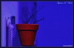 Vaso con fondo azzurro... in un giorno d'inverno - Aprile-2017 (agostinodascoli) Tags: vaso colore fullcolor nikon nikkor cianciana sicilia art digitalart digitalpainting photoshop blu photopainting texture agostinodascoli
