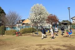 Spring Has Come! (seiji2012) Tags: 濯紫公園 川越 コブシ こぶし children playground magnoliakobus spring