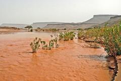 Essence of Our Existence (Bergfex_Tirol) Tags: bergfex marokko morocco desert sahara wadi draa water wasser fluss river