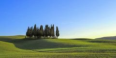 Tuscan grove (Blende1.8) Tags: grove baumgruppe hain wäldchen toskana toscana tuscany tuscan landscape landschaft italy italia italien green blue sky himmel felder weite colors colours colour color vivid trees bäume tree zypresse zypressen cypresses nikon d700 carstenheyer travel