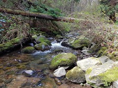 Wagg Creek (walneylad) Tags: waggcreek mahonpark northvancouver britishcolumbia canada park parkland urbanpark woods woodland forest urbanforest rainforest creek water trees rocks ferns easter sunday april spring view nature scenery