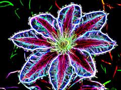 electric flower power (LotusMoon Photography) Tags: flower fractalius photoshop photomanipulation photoart postprocessed photopainting blackbackground vividcolor annasheradon lotusmoonphotography