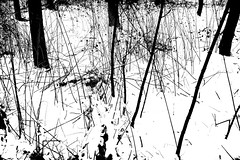 Promenade en forêt (PWM7553) (Pieter Berkhout) Tags: drawing forestground forestfloor pieterberkhout walk park trees bush bushes snow floor wandeling bomen struik struiken sneeuw vloer bosgrond