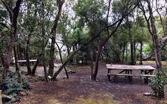 Bramble Cove. Port Davey. Tasmania.
